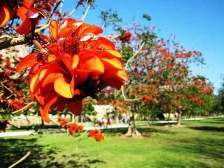 gardens-905224_540